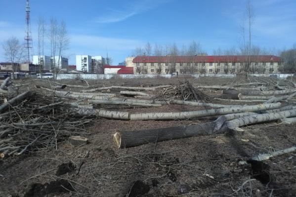 Раньше на этом месте стояли более 300 деревьев, а теперь здесь поставят торговый объект