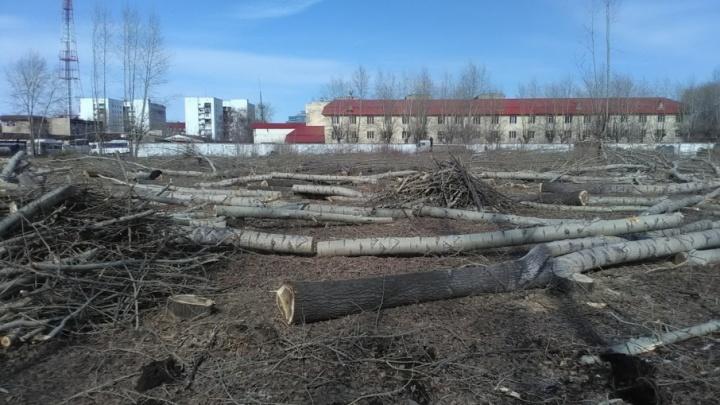 У «Привоза» вырубили 361 дерево, чтобы построить новый рынок