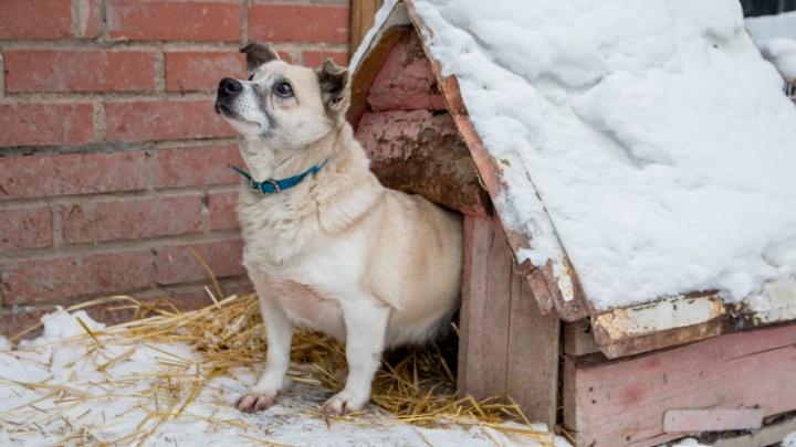Из розовой будочки в любящий дом: собаку Гаечку забрали из самарского приюта