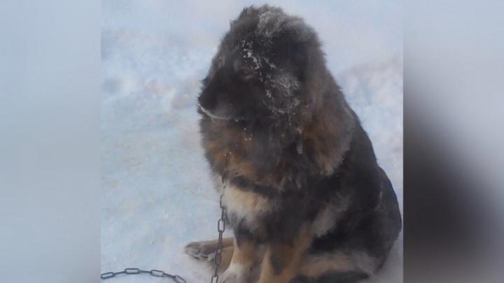 Суд отклонил апелляцию пермяка, приговоренного к ограничению свободы за жестокое обращение с собакой