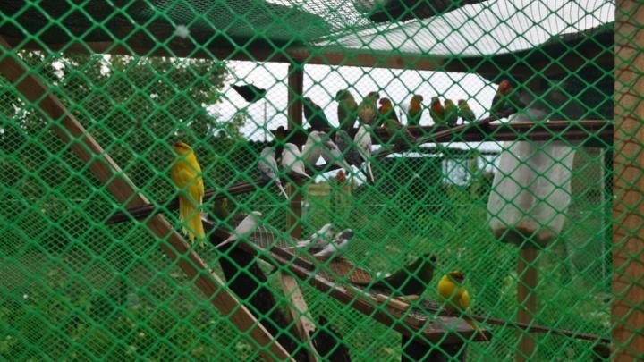 Полсотни попугаев передали ростовскому зоопарку пограничники