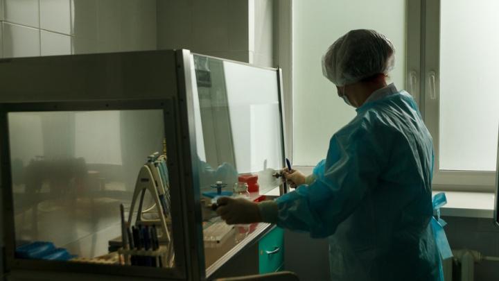 По 20 штук в день: репортаж из тюменской лаборатории, где клещей исследуют на инфекции
