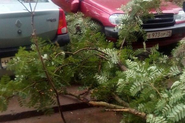Порывистый ветер в Новодвинске повалил дерево на стоящие рядом автомобили