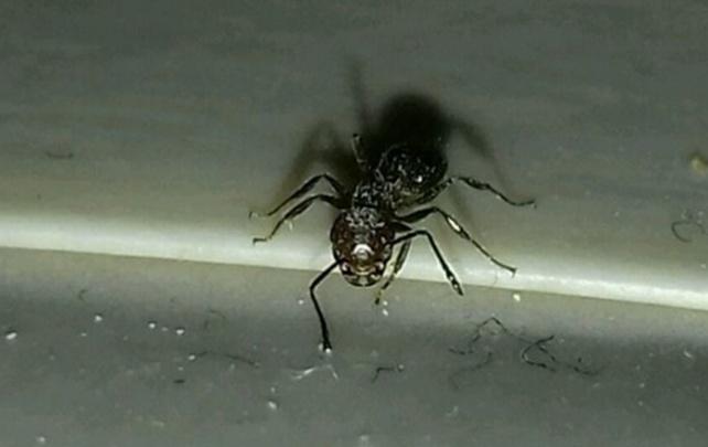 Ростовчанин продает ручного муравья