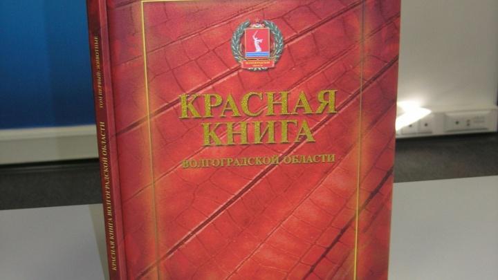 В Волгоградской области готова к переизданию Красная книга региона