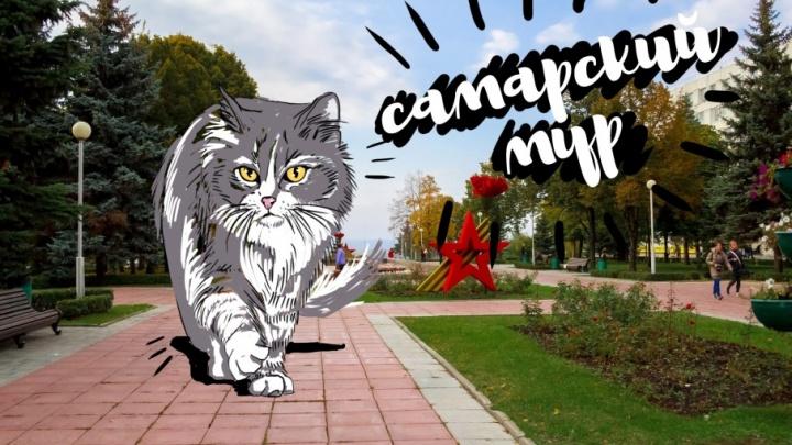 Пушистое нашествие в Самаре: в городе поселились гигантские коты