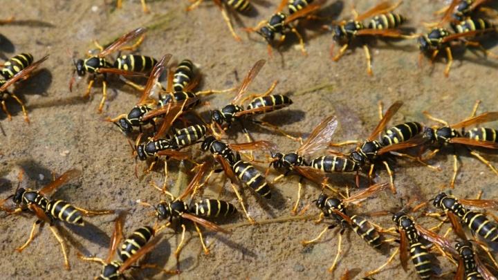 С острым жалом: топ самых опасных насекомых Волгограда