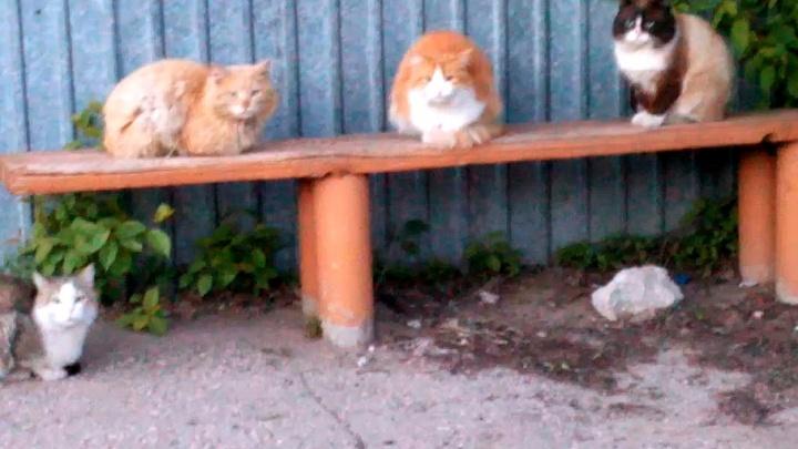 Четверо пушистых: самарец снял мимимишное видео о вечерних посиделках дворовых котов