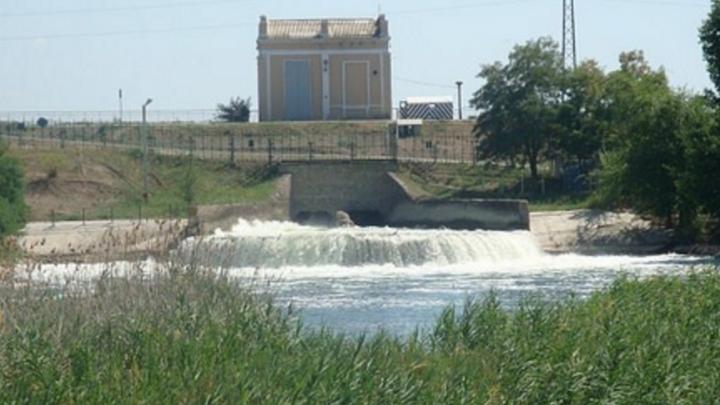 В Веселовское водохранилище выпустили шесть тысяч особей белого амура