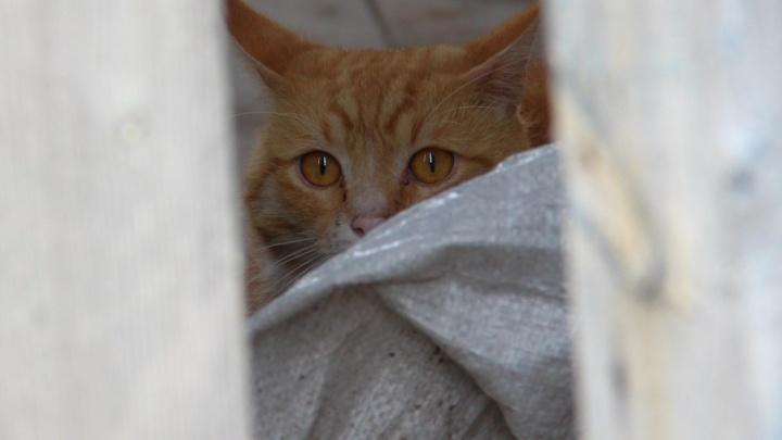 В Самарской области дети транслировали в Сети убийство кота