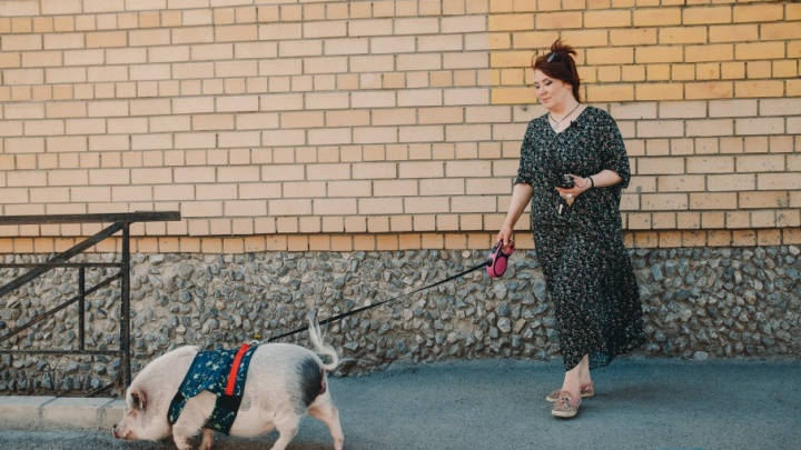 В квартире тюменки живет карликовая свинка: она запоминает цвета и гуляет на поводке