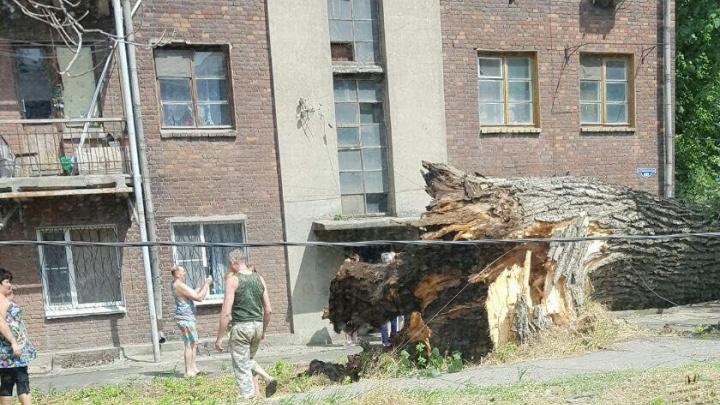 Огромный рухнувший тополь и ветки на проводах: в Ростовской области бушевала непогода