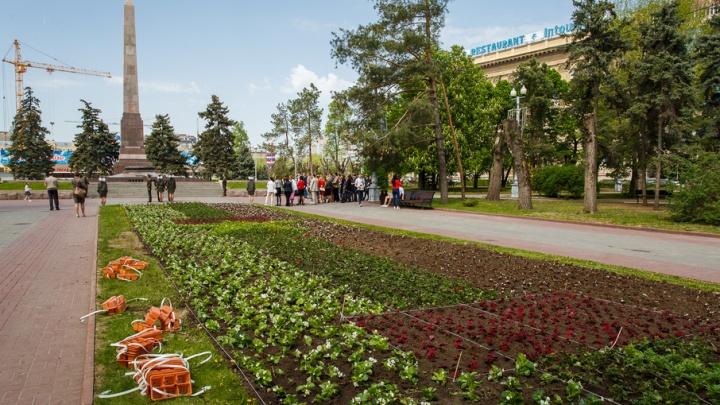 В Волгограде высаживают самую дорогую клумбу