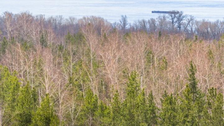 Жителям Самарской области запретили посещать леса до конца августа