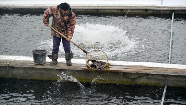 «Эту рыбу я ел вместо молока матери»: бизнесмен из Армении построил первый форелевый завод под Волгоградом
