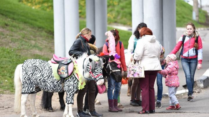 Где в Ярославле можно будет покататься на лошадях: список мест