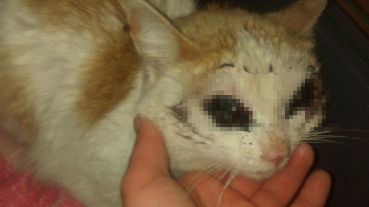 На Южном Урале на пороге кафе нашли кота без глаз