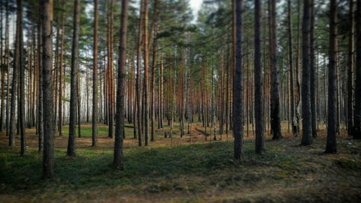 80-летнего пенсионера нашли живым в лесу спустя сутки