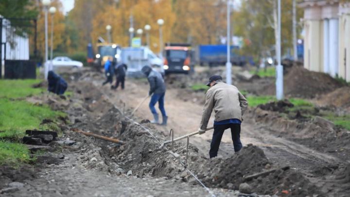 Рябиновая аллея в Архангельске появится раньше срока