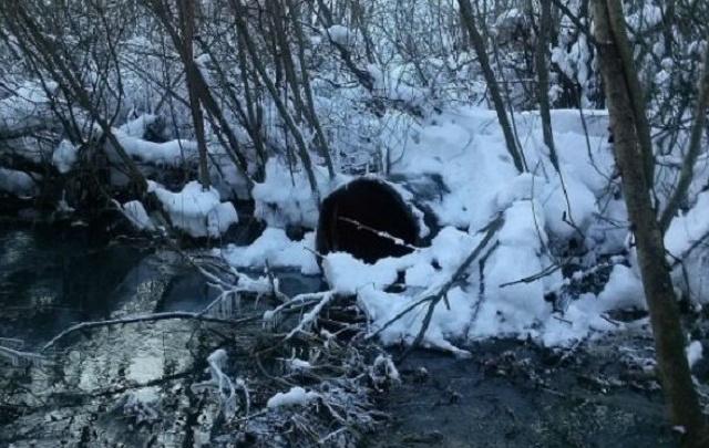 Тюменцы пожаловались, что в Гагаринский парк сливают нечистоты