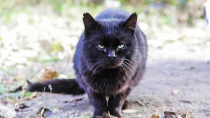 В донском селе из-за бешеного кота объявят карантин