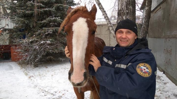 Заблудившаяся в Тюмени лошадь сама пришла к спасателям