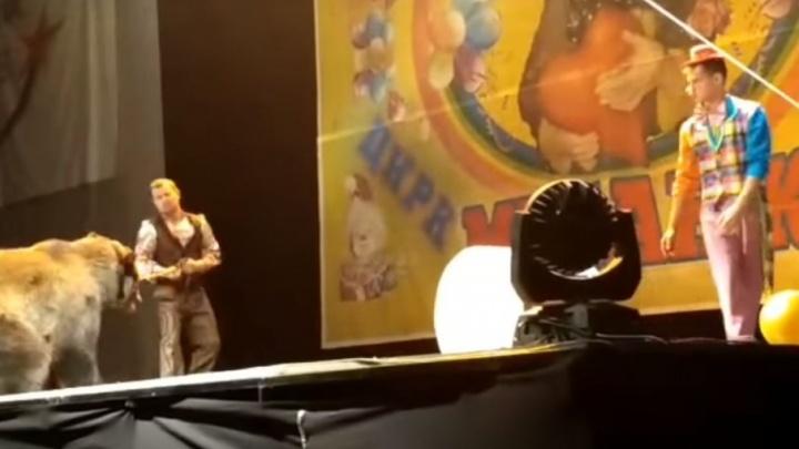 Во время выступления пермского цирка в Сыктывкаре медведь напал на дрессировщика