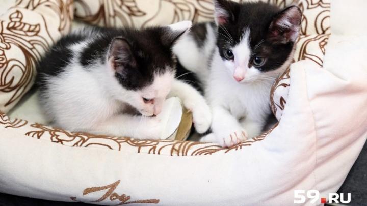 «Была мечта окружить себя котиками»: в Перми открылось антистресс-кафе, в котором живут 13 котов