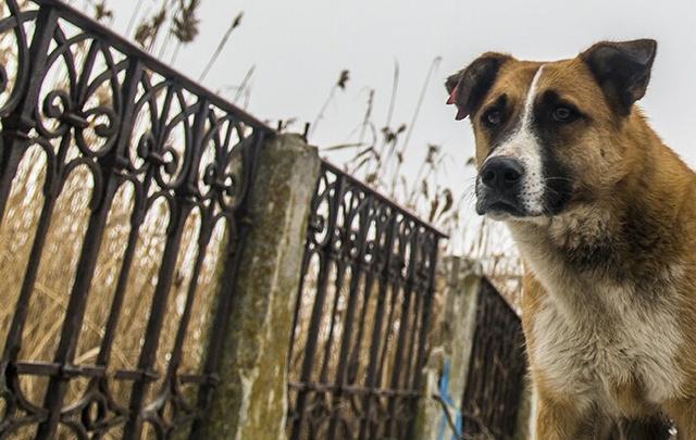 В Ростовской области мужчина забил палкой бешеную собаку, защищая дочь