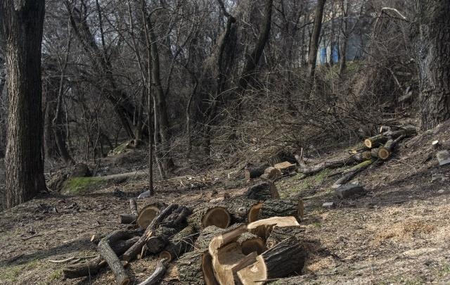 На Дону в лесу нашли тело маленькой девочки