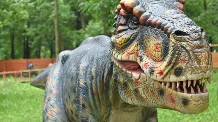 В Ярославле откроется парк с гигантскими китайскими ящерицами