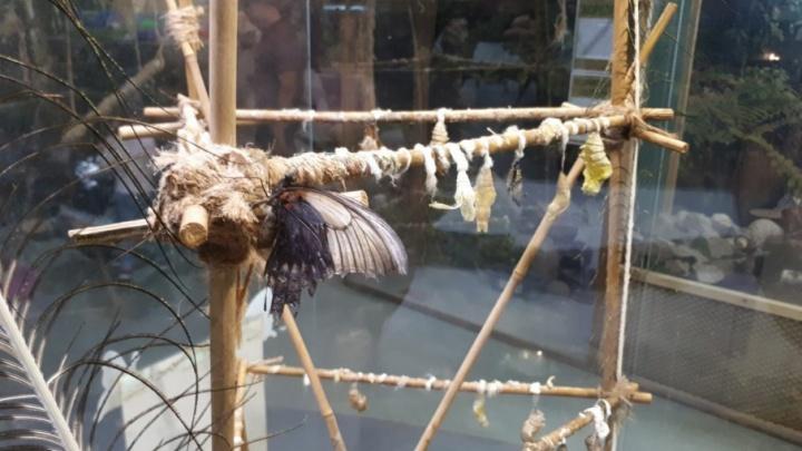 Челябинцы остались без тропических бабочек из-за тайфуна на Филиппинах