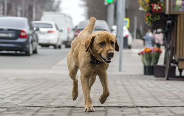 В ростовских парках появятся дорожки для выгула собак