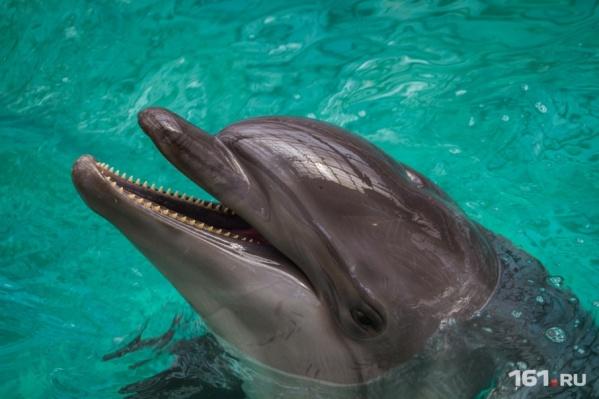 Дельфины воспринимают обучение как игру