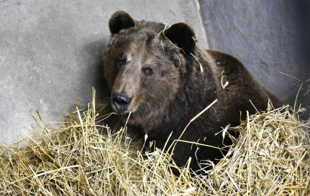 Ярославцев зовут разбудить медведей