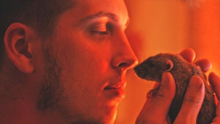 Ярославец поймал в своей квартире семью крыс: в каком районе больше грызунов