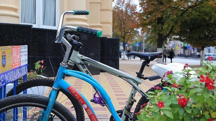 Ростовчане предпочли велосипеды книгам и журналам