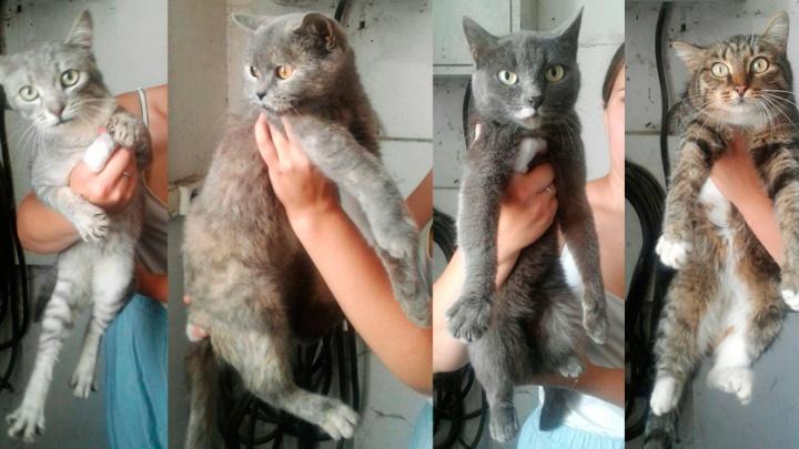 Пушистым ищут хозяев: «Горэкоцентр» отловил десятки кошек, среди которых много домашних