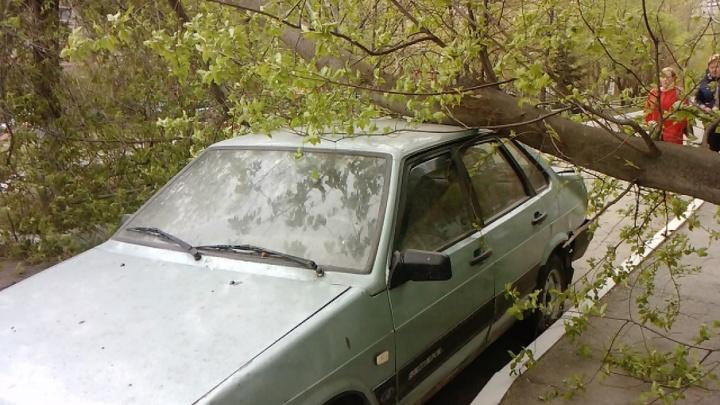 В Челябинске сильный ветер повалил дерево на автомобиль