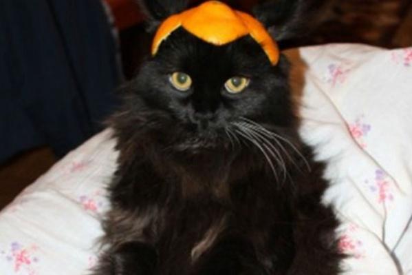 Черного кота хозяин оценил в один млн рублей