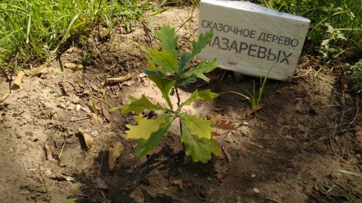 В Комсомольском саду Волгограда укоренились более 100 молодых дубов