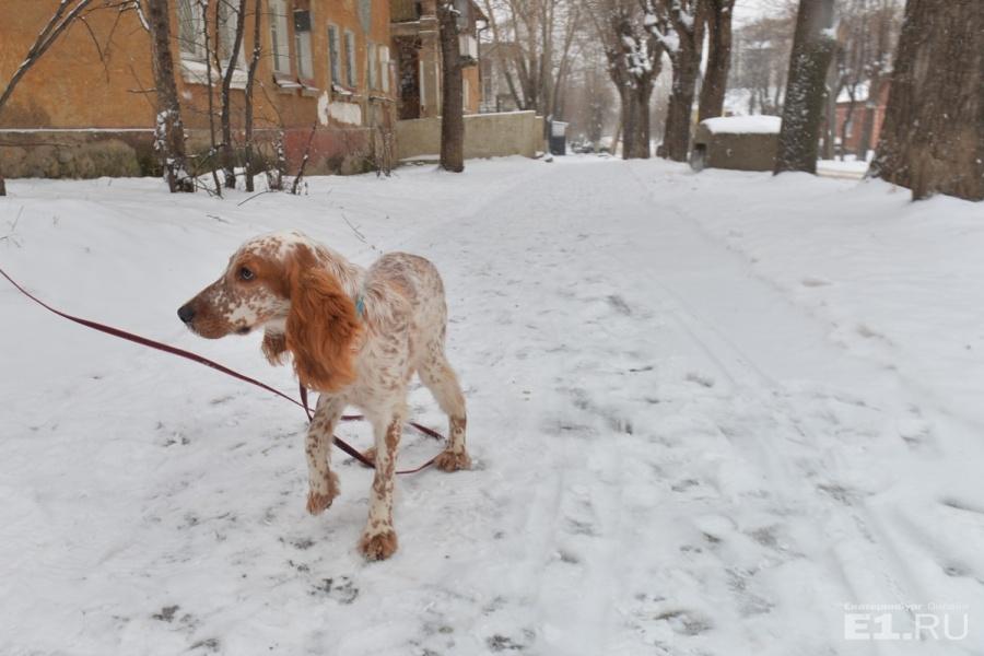 В лес люди ходят гулять с собаками