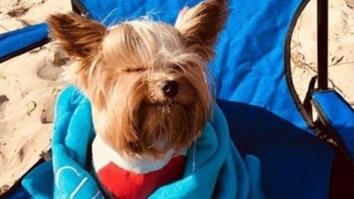 День домашних животных: Instagram-подборка питомцев, которым нескучно