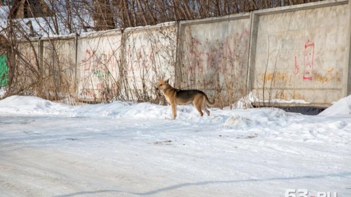 В Самаре приютам для бездомных животных помогут деньгами