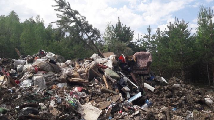 На ликвидацию несанкционированной свалки в районе Комарово из бюджета выделили 6,3 млн рублей