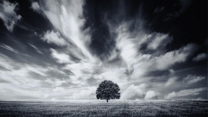 Лучшие фотографы Волгограда участвуют в международном конкурсе