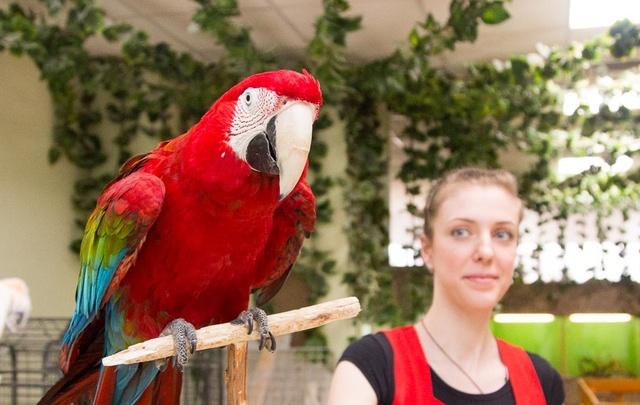 Нянечка для трудных обезьян: пять испытаний на рабочем месте в зоопарке