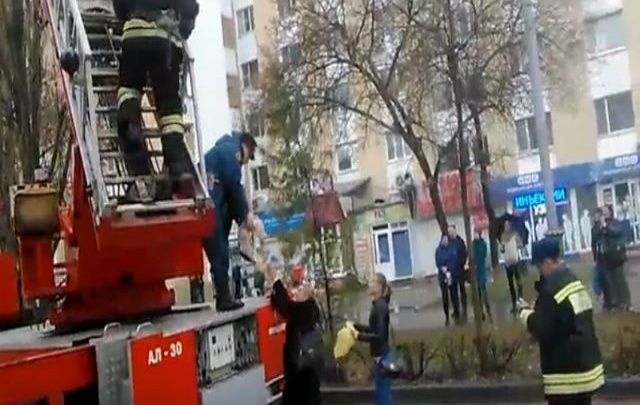 Пожарные спасли домашнего кота, просидевшего на дереве три дня