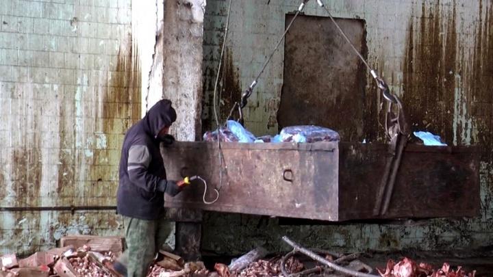 Под Чапаевском нашли нелегальный скотомогильник с трупами коров и бродячих животных