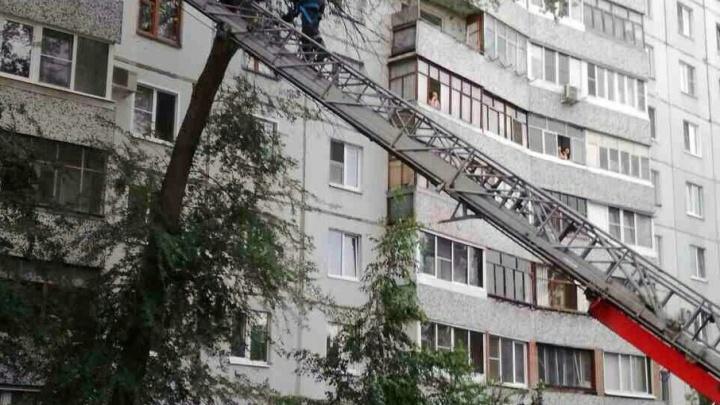 В Тольятти спасатели эвакуировали с дерева мужчину: молодой человек пытался спасти котенка